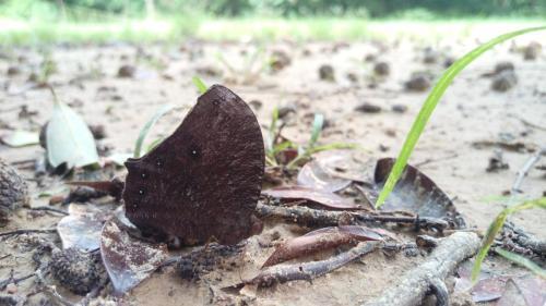 生態誌 原來蝴蝶不只有吸花蜜
