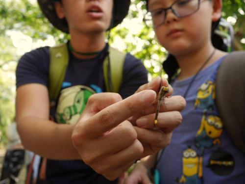 生活誌 自然觀察的好幫手 捕蟲網