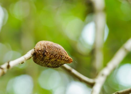 生態誌 螳螂寶寶的家