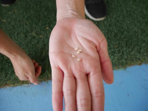 職人誌 珍貴的米粒