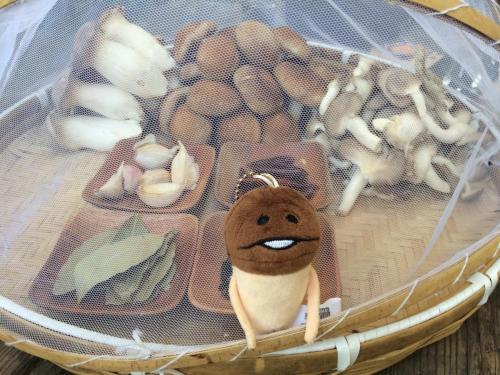 生活誌 想逃跑的菇菇